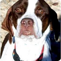 Adopt A Pet :: HUXLEY - Wakefield, RI