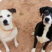 Adopt A Pet :: Betty & Skylar - Alamogordo, NM