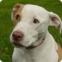 Adopt A Pet :: Opal- Pending Adoption - Lancaster, PA
