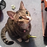 Adopt A Pet :: Irene - Millersville, MD