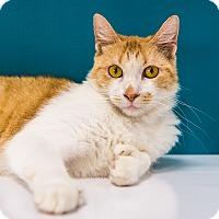 Adopt A Pet :: Neptune - Chandler, AZ