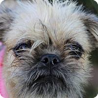 Adopt A Pet :: Gizmo - Pismo Beach, CA