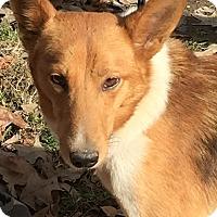 Adopt A Pet :: Jonas - Stamford, CT