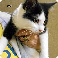 Adopt A Pet :: Otis - Oskaloosa, IA