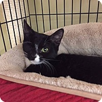 Adopt A Pet :: Francois - East Meadow, NY
