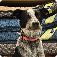 Adopt A Pet :: Rebel - Weatherford, TX