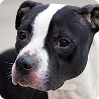 Adopt A Pet :: Cece - Elyria, OH