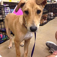 Adopt A Pet :: Sandy - Gainesville, FL
