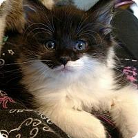 Adopt A Pet :: Luxor - Cincinnati, OH