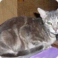 Adopt A Pet :: Shady Lady - Dallas, TX