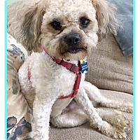 Adopt A Pet :: JAZZ-YOUR NEW BEST FRIEND - Seattle, WA