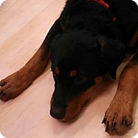 Adopt A Pet :: Sargent - Scottsdale, AZ