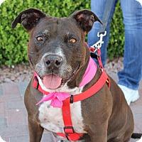 Adopt A Pet :: CADY - Las Vegas, NV