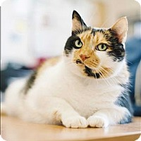 Adopt A Pet :: Gigi - Santa Rosa, CA