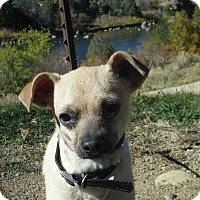 Adopt A Pet :: Coconut - Durango, CO