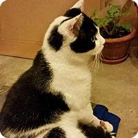 Adopt A Pet :: BW - Colmar, PA