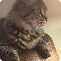 Adopt A Pet :: Ryland - Manchester, CT