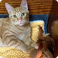 Adopt A Pet :: Carter - Spring, TX