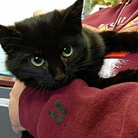 Adopt A Pet :: India-Shelter - Rustburg, VA