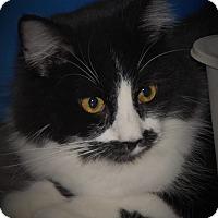 Adopt A Pet :: Ramsey - Wilmington, OH