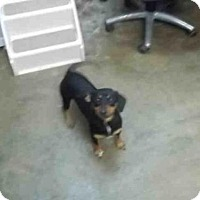 Adopt A Pet :: LOVEY - Fort Walton Beach, FL