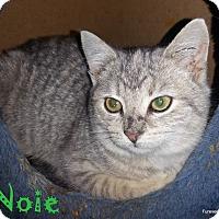 Adopt A Pet :: NOIE - Golsboro, NC