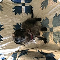 Adopt A Pet :: Lola - Crestview, FL