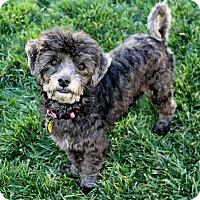 Adopt A Pet :: Katie (and Tobie) - Bellflower, CA