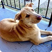 Adopt A Pet :: Rita - Manhattan, KS