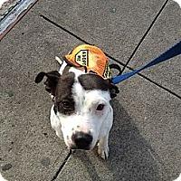 Adopt A Pet :: Fannie Lou - Brooklyn, NY