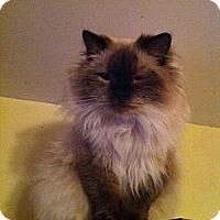 Adopt A Pet :: Momma Kiley - Pittstown, NJ