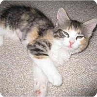 Adopt A Pet :: Baby - Mesa, AZ