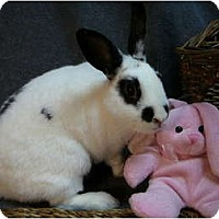 Adopt A Pet :: Clementine - Newport, DE