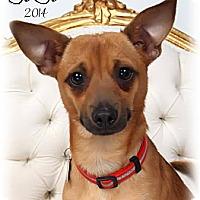 Adopt A Pet :: Jojo - Metairie, LA