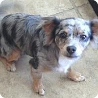 Adopt A Pet :: Napoleon - Orlando, FL