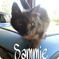 Calico Cat for adoption in Salisbury, North Carolina - Sammie