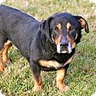Adopt A Pet :: HERSCHEL WALKER