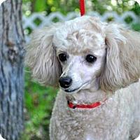 Adopt A Pet :: SADIE JOY - Elk River, MN