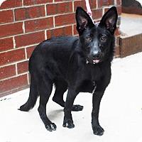 Adopt A Pet :: Dakota-Pending! - Detroit, MI