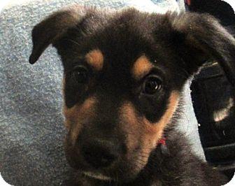 Lloydminster Dog Rescue