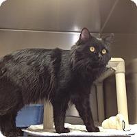 Adopt A Pet :: H-7 Dewy - Triadelphia, WV