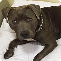 Adopt A Pet :: Magical Mr Morpheous - Albuquerque, NM