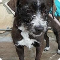 Adopt A Pet :: Annabelle - Canoga Park, CA