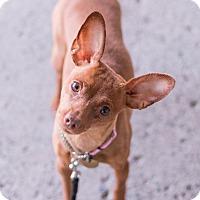 Adopt A Pet :: Trina - Syracuse, NY