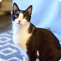 Adopt A Pet :: Tweedle Dum - Modesto, CA