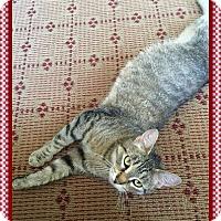 Adopt A Pet :: Bessie - Mt. Prospect, IL
