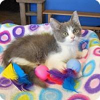 Adopt A Pet :: Seth - Glendale, AZ