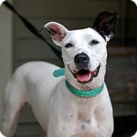 Adopt A Pet :: Kasha - Baton Rouge, LA