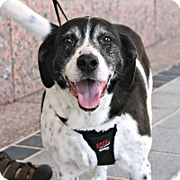 Adopt A Pet :: Jeffrey *Foster me - Richmond, VA