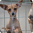 Adopt A Pet :: Brugg